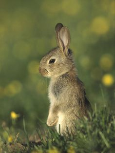 bokeh image,,,,but most importantly-i want a bunny