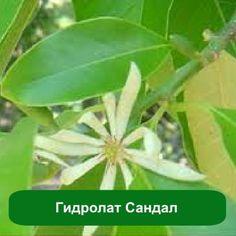 Гидролат Сандал, 1 литр
