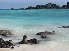 Galapagos Islands, Ecuador: Typical beach view.
