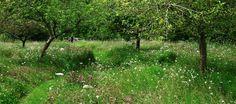 Berkshire Garden | Tom Stuart-Smith