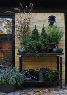 Do It Yourself Shed Plans - Home, Work & Health Love Garden, Garden Pots, Back Gardens, Outdoor Gardens, Pot Plante, Farmhouse Garden, Outdoor Landscaping, Garden Inspiration, Beautiful Gardens