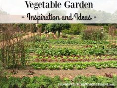 Vegetable Garden Inspiration and Ideas | Proverbs 31 Woman