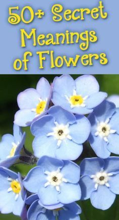 156f437b84b8a1 Flowers  Secret Meanings - Coupons and Deals - SavingsMania