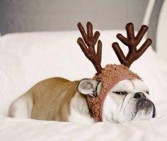 dog with Reindeer headband - grumpy - funny