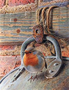 As Cores Da Arte: Andrew Hutchinson Robin Bird, Color Pencil Art, Bird Drawings, Bird Pictures, Watercolor Bird, Wildlife Art, Bird Art, Bird Feathers, Beautiful Birds