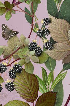 Jo Malone London | Blackberry & Bay Print #Design #Chinoiserie