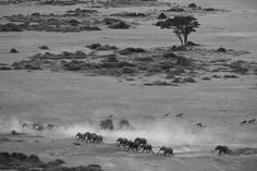 Elephants on the move in a dusty Amboseli. Tortilis Camp (Photo credit: Adam Bannister)