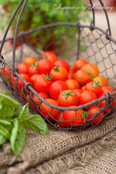 so basil, tomatoes, fresh mozzarella and a drizzle of Balsamic...ahhhhhhhhhh