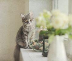 pretty grey kitty