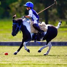 www.horsealot.com, the equestrian social network for riders & horse lovers   Polo pony.
