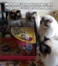 May the best player win - LOLcats is the best place to find and submit funny cat memes and other silly cat materials to share with the world. We find the funny cats that make you LOL so that you don't have to. Funny Animal Memes, Cute Funny Animals, Funny Animal Pictures, Cute Cats, Funny Cats, Random Pictures, I Love Cats, Crazy Cats, Tierischer Humor