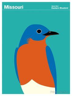 Missouri Bluebird orientale Missouri designato l'adorabile Bluebird orientale come l'uccello ufficiale dello stato nel 1927.