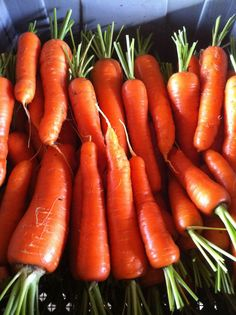 Carrot Seeds ★ CHANTENAY RED CORED CARROT ★ Heirloom Variety ★ 100+ Seeds ★ Carrot Seeds, Growing Vegetables, Organic, Red, Ebay, Planting Vegetables, Vegetable Gardening