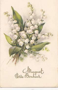 ♥ Lily of the valley ♥