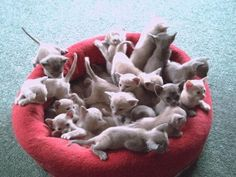 kittens kittens kittens galore!!! OH MY!!!!!! ( I only have 8 babies right now & thought THAT was a lot!!! lol)