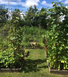 If you're thinking about starting home vegetable garden ideas for small spaces or raised vegetable garden layout on backyard. here are some ideas for you. Vertical Vegetable Gardens, Backyard Vegetable Gardens, Vegetable Garden Design, Little Gardens, Small Gardens, Tiered Garden, Small Space Gardening, Growing Vegetables, Garden Planning