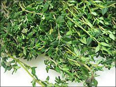 CIMBRU DE GRADINA -  Nume engleza : SAVORY (also Thyme)  Partea folosita : Toate partile plantei aflate deasupra solului. Planta trebuie taiata inainte de a inflori. Familia de plante : Lamiaceae (familia mentei).
