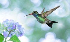 Hummingbird Spirit Animal