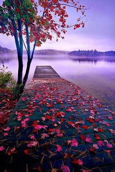 "expression-venusia: "" Lake Dock, Thousand Expression Photography """