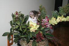 Just havin' fun! Cats, Fun, Gatos, Kitty, Cat, Cats And Kittens, Funny, Kittens