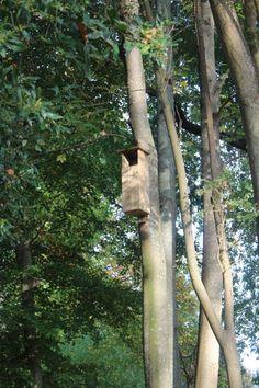 Caja nido de cárabos en el Jardín Cristina EneaCaja nido de cárabos en el Jardín Cristina Enea puesta por la Asociación Aranzadi