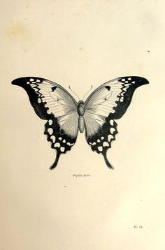 Magnifique papillon antique impression origine par LyraNebulaPrints