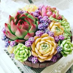 Colorful Succulents, Cacti And Succulents, Planting Succulents, Cactus Plants, Garden Plants, Indoor Plants, Planting Flowers, Air Plants, House Plants