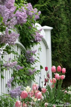Garden Inspiration ~ Lilacs, tulips, and fence, Mackinac Island Flower Garden, Spring Flowers, Plants, Lilac, Cottage Garden, Gorgeous Gardens, Beautiful Flowers, Love Flowers, Beautiful Gardens