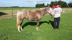 Lacey - Red Roan Appaloosa Mare