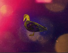 """Check out new work on my portfolio: """"Romantic Duck""""… Working On Myself, New Work, Behance, Romantic, Check, Painting, Art, Art Background, Painting Art"""
