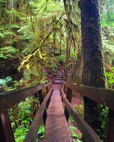 Marymere Falls Trail in Olympic National Park, Port Angeles, Washington, United States Oh The Places You'll Go, Places To Travel, Places To Visit, Travel Destinations, Composition Photo, Columbia River Gorge, All Nature, Future Travel, Belle Photo