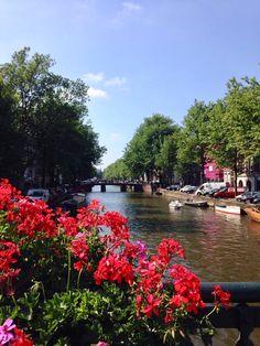 flowers, amsterdam, pretty, colour
