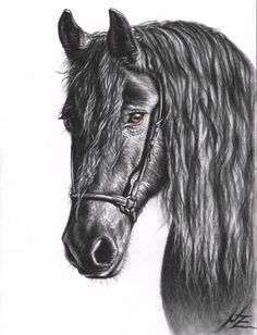 Black and brown charcoal, Friesian horse, 2011 by arts-and-horses. Realistic Animal Drawings, Horse Drawings, Horse Portrait, Friesian Horse, Charcoal Drawing, Equine Art, Horse Art, Art Design, Les Oeuvres