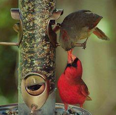 384 Best Beautiful Birds Images On Pinterest In 2018 Beautiful