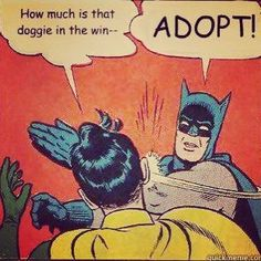 adopt dont shop - Google Search