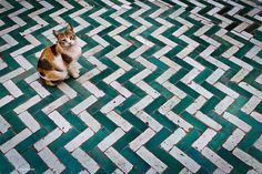 tiles and cat in Marrakech, Morocco