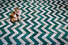 cat in  El Bahia Palace - Marrakech, Morocco by Phil Marion, via Flickr