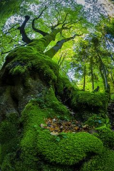 """superbnature: """" The moss by barisicphoto """""""
