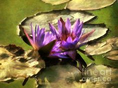 """Lavender Lotus: by RC Dewinter http://fineartamerica.com/featured/lavender-lotus-rc-dewinter.html"