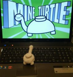 11 Best Mine Turtle Images Sea Turtles Tortoise Tortoises