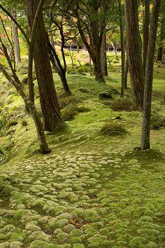 Simply beautiful. I love moss.