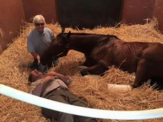 American Pharoah with Bob Baffert and Ahmed Zayat...horsing around! July 2015.