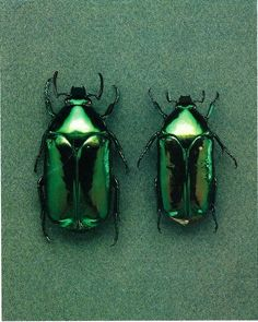 Insects: The taste of Petrol and Porcelain | Interior design, Vintage Sets and Unique Pieces www.petrolandporcelain.com Emerald beetles | Colour me | Pinterest…