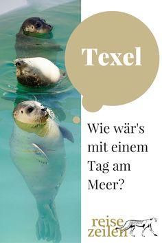 Auf nach Texel! Nordseestrand geniessen und die Seehunde bei ecomare besuchen.