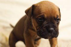 Todos los lloriqueos no son iguales, por lo que incluso antes de pensar de disuadir a su cachorro de vocalizar sus emociones, usted debe estar seguro de que no está lloriqueando por una razón médica. Una vez que haya descartado cualquier razón perjudicial para su comportamiento de lloriquear, se puede …