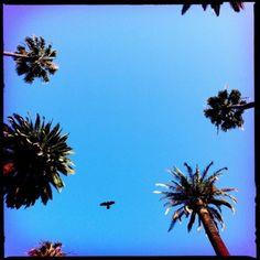 LA by Nic Adler