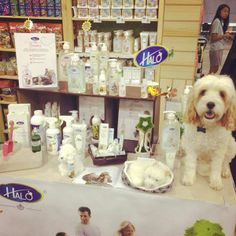 Pet Expo Singapore with Jet Cavoodle and Halo Dog Products via myoodle.com