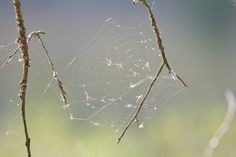 Spider in action. Spider, Action, Photography, Animals, Spiders, Group Action, Photograph, Animaux, Photography Business