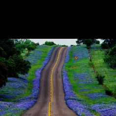 Spring in TX Hill Country