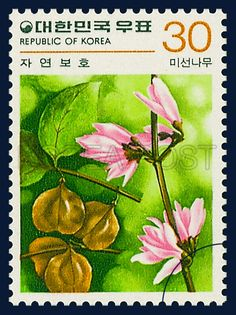 Postage Stamps in the nature Conservation Series 자연보호 시리즈(제5집) 1980 01 20 1159 미선나무